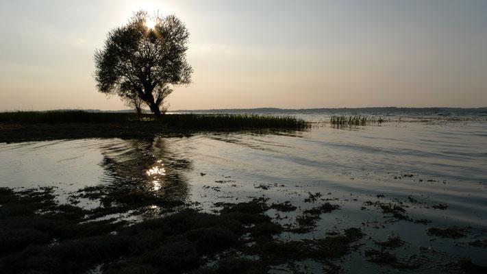 Lac de la forêt d'Orient, Mesnil Saint Pere, F,  P1030411.JPG