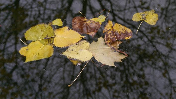 Feuilles, Ecluse des Morts, Canal Saint Martin, 75010 Paris, F,