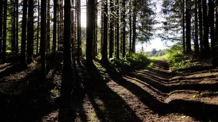 Entre deux bois, Sapins Lonchampt, 25330  Amathay-Vésigneux, Doubs, Franche-Comté, F,