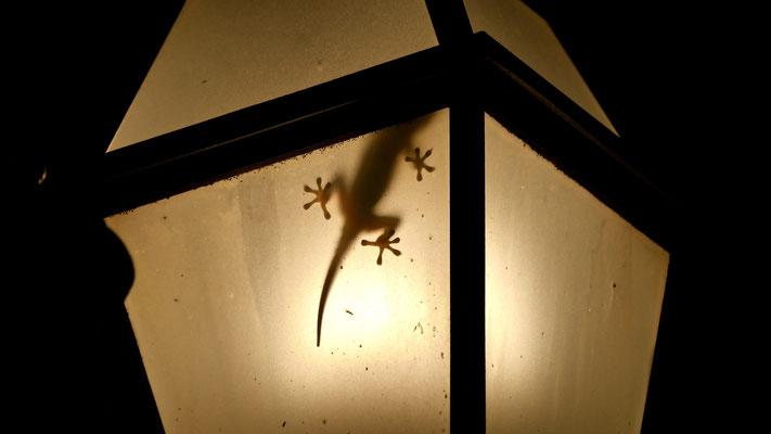 Gecko dans lampadaire , terrasse Hotel Mozart, Via dei Greci, 23, 00187 Rome, Italie, It,