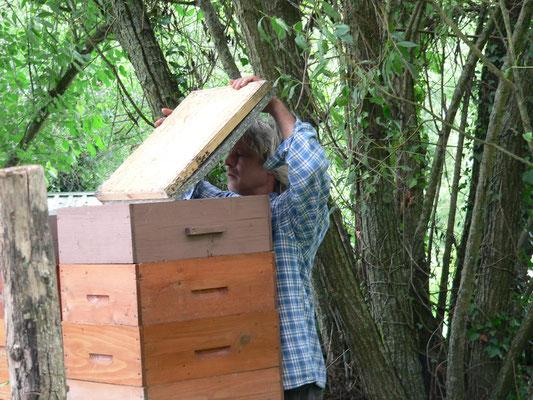 17.06. Gérald kommt nach den Bienen schauen