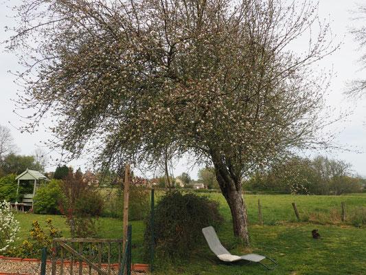 Ein ziemlich alter Baum schon, der im nächsten Winter dann einen Schnitt kriegen wird