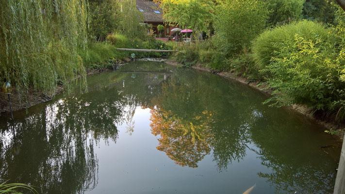 08.09. so wenig Wasser im Teich wie noch nie