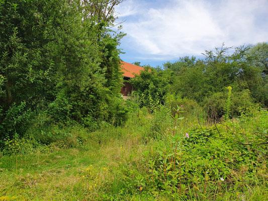 Blick vom wilden Garten zum Haus hoch