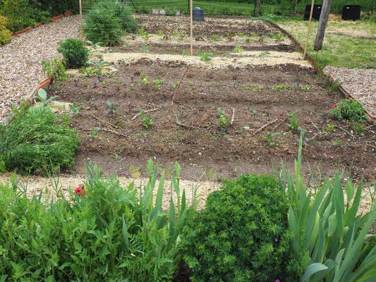 Hier der Gemüsegarten Ende April / Anfang Mai