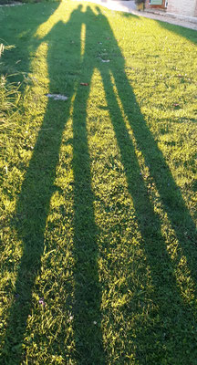 20.06. Isabella, Ursula un ich - nach einem Boule-Spiel quer durch das Areal