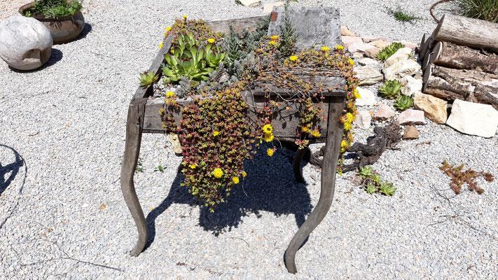 Dieses Tischlein steht im Steingarten