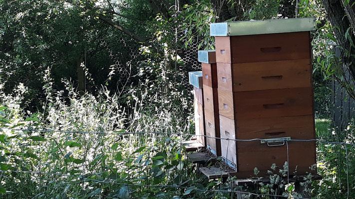 Die Bienen fliegen aus