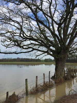 07.01. Winterliche Überflutungsbilder von Annette