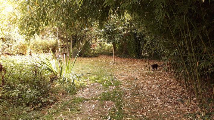 14.09. Blick am Bambuswald vorbei