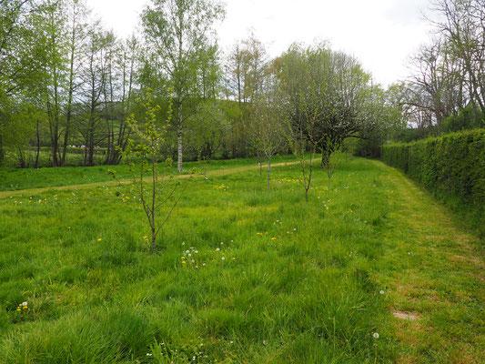 Blick von Nordosten in die Blumenwiese