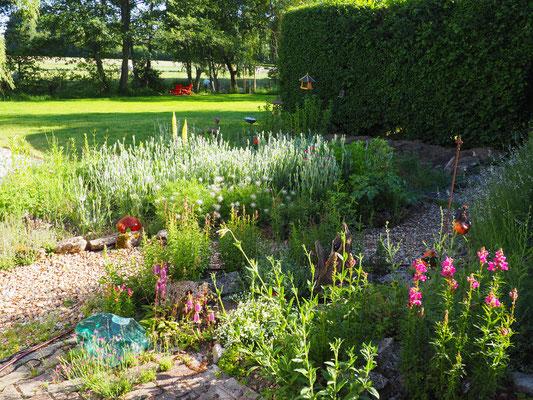 Die Kronen-Lichtnelke füllt den Steingarten zur Hälfte aus