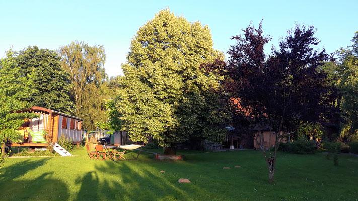 20.06. Der Lindenbaum bei der Gitane ist in voller Blüte