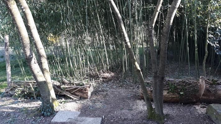 23.03. Der Bambuswald ist von seiner Last befreit und kann sich wieder entfalten