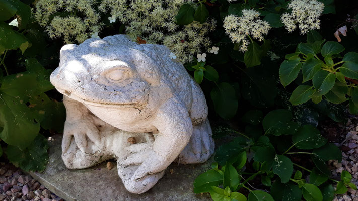 Dieser Froschkönig bewacht die Kanalisation