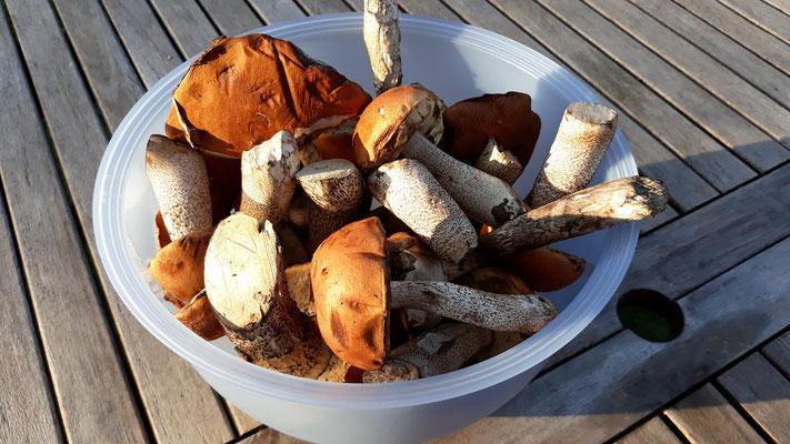 Pilze von Michel