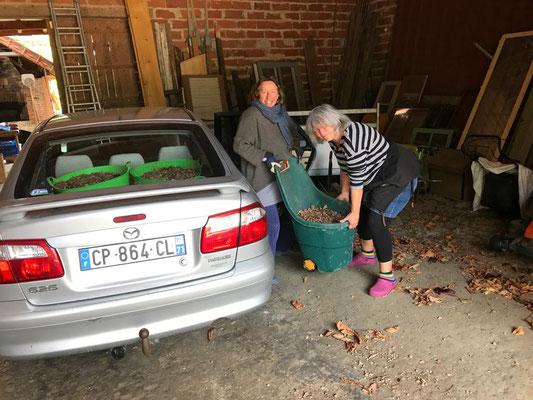 24.10. Das Auto voll mit Eicheln!