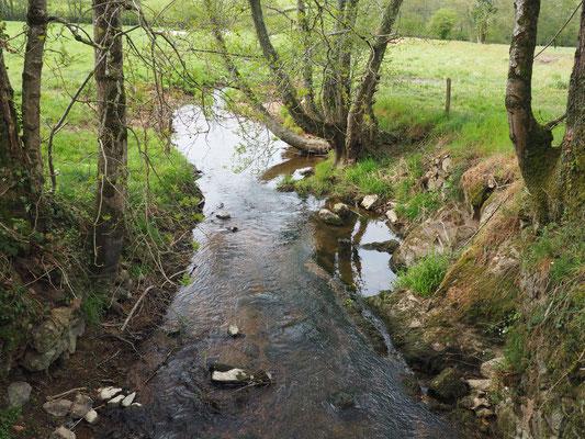 Am Ende meines Terrains führt eine kleine Brücke über die Somme zu einer Weide