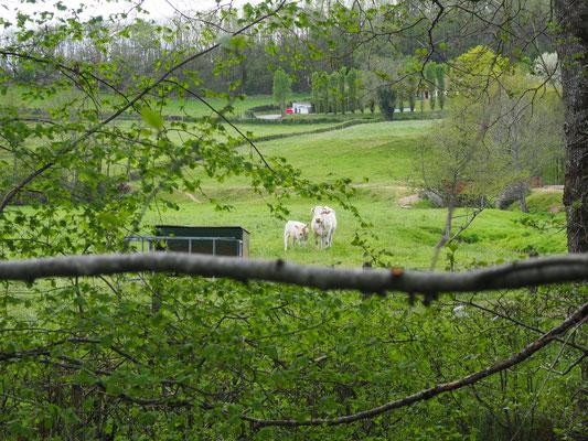 Die stehen auf einer Weide nebenan