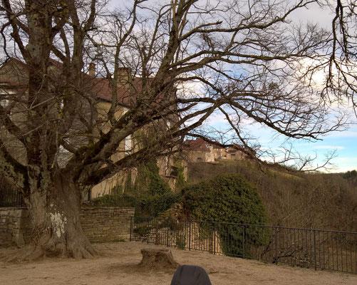 Eine mächtige Linde auf einem Belvédère von Château Chalon