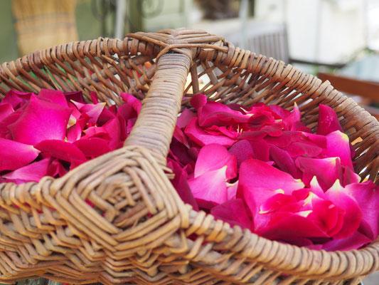 Gesammelte Rosenblütenblätter