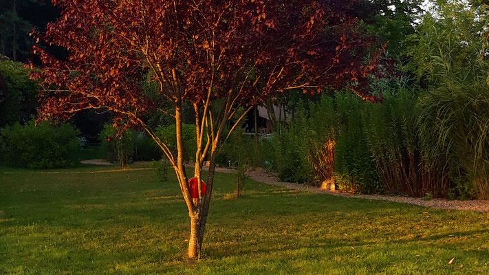 12.07. Die Bäume wachsen und entwickeln sich ...