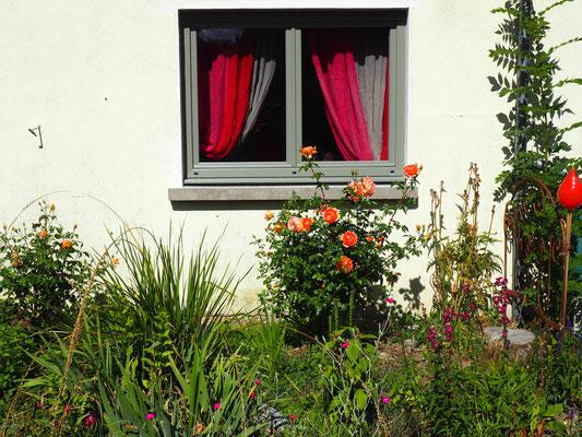 Ein kleiner Rosengarten vor dem Fenster des Studios