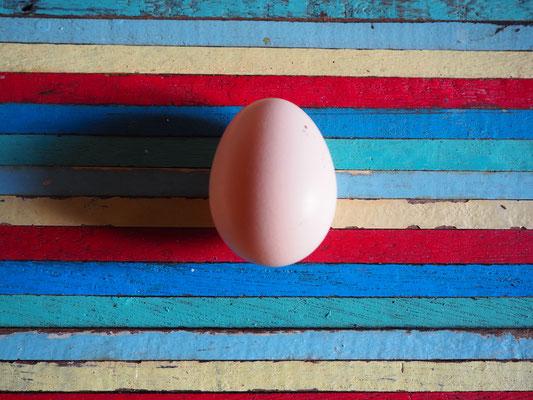 Anfangs Mai das erste Ei!