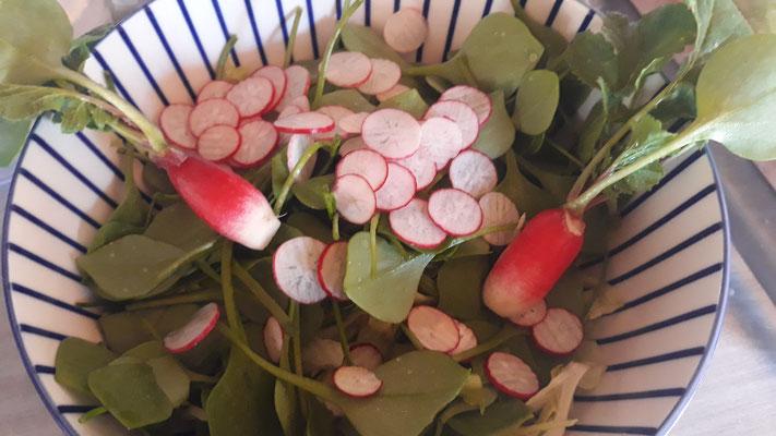 Ah, der erste frische Salat aus dem Garten (Gewächshaus)