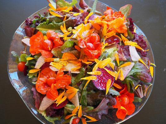 Blüten und Früchte von Kapuzinerkresse