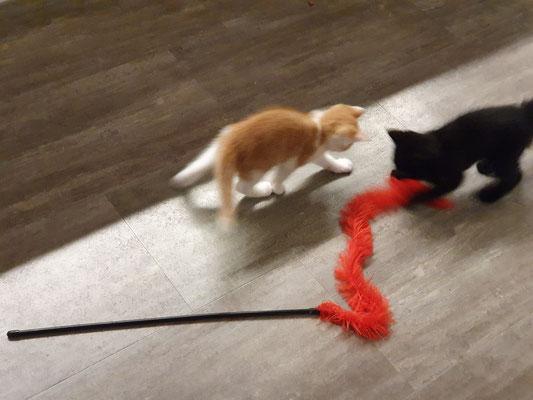 Die Katzenbabys bei Andrea und Zora