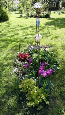 26.04. Blühende Tulpen im bretonischen Beet