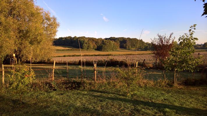08.09. Morgenstimmung - Blick über das Land