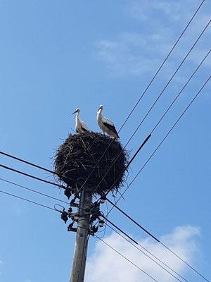 Das im Dorf heimische Storchenpaar