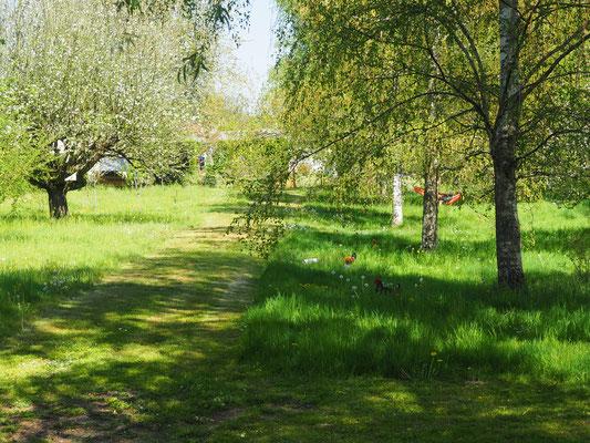 Der Weg mitten durch die Wiese