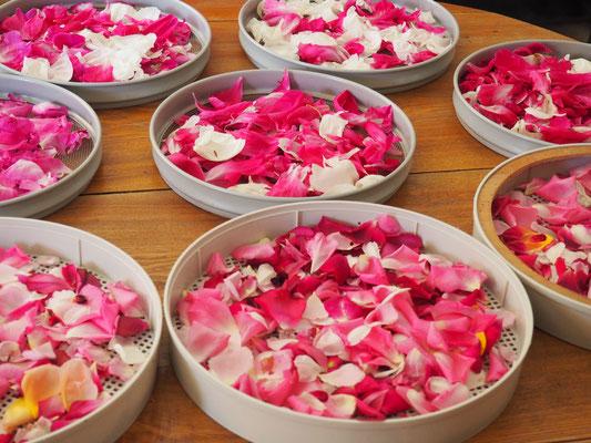 Blütenblätter von Rosen & Pfingstrosen