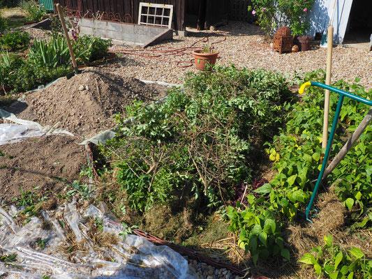 Es darf und soll auch viel grünes Material drauf - oder auch alter Kompost