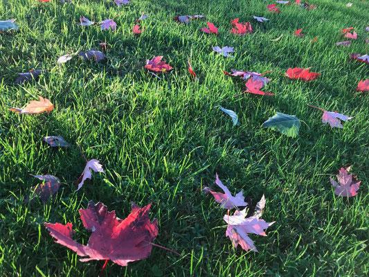30.10. Stillleben mit Herbstblättern