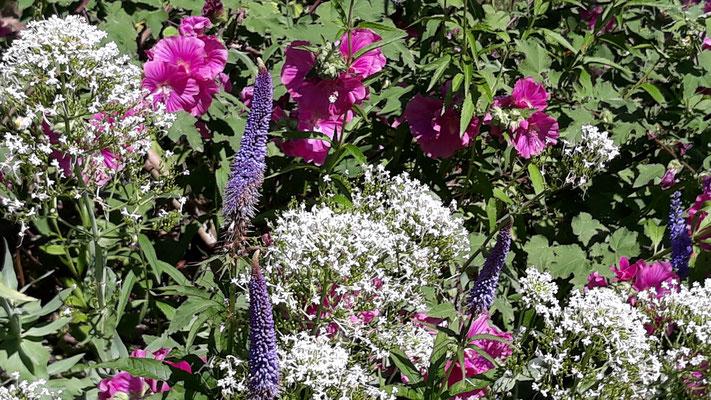 Bunte Blumenbeete