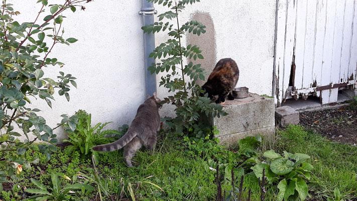Uh, die Katzis dürfen das erste Mal raus!