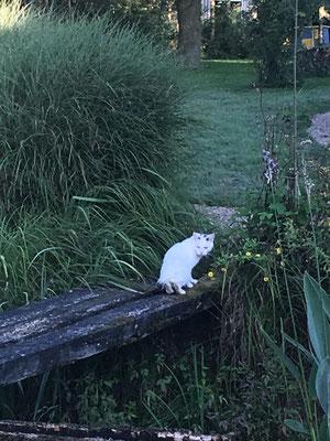 Gollum, die halbwilde Katze, die ich mitfüttere