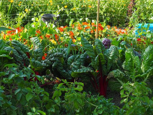 Herrlich buntes Gemüse