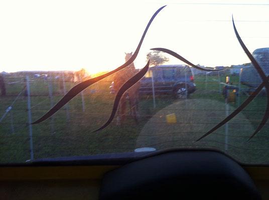 Mein Ausblick bei Sonnenaufgang. Dem gelben Eimer ist schwindlig ...