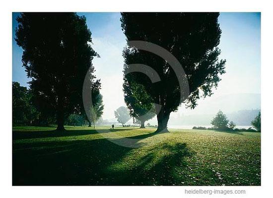 Archiv-Nr. hc2001124 / Sommermorgen an der Neckarwiese