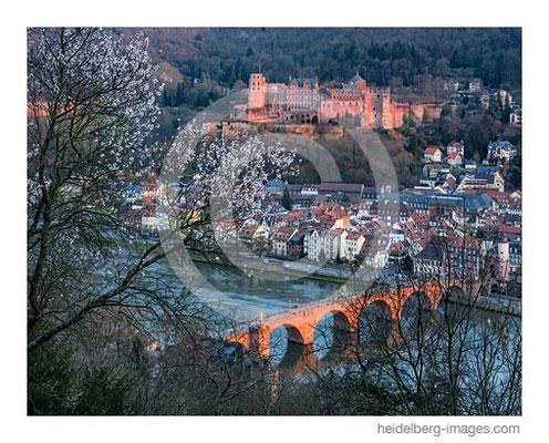Archiv-Nr. hc2014116 / Frühlingsstimmung und Heidelberger Schloss
