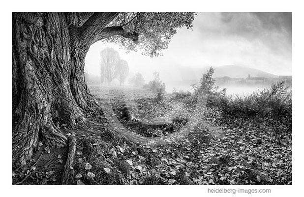 Archiv-Nr. h2017162 / Herbstliche Neckarwiese im Nebel