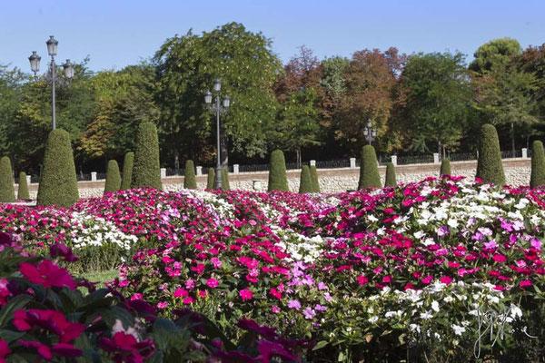 Il giardino inglese - (Madrid 2014)