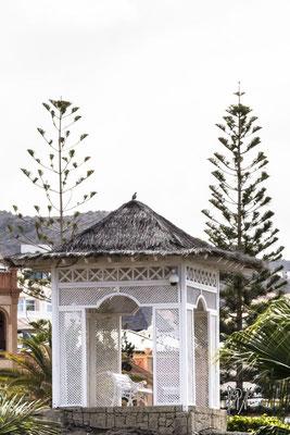 La tortorella sulla panchina - (Tenerife 2015)