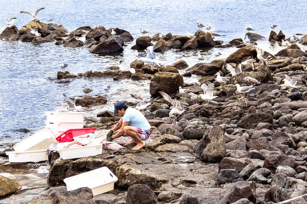 Aspettando il pasto... - Lanzarote - (2017)