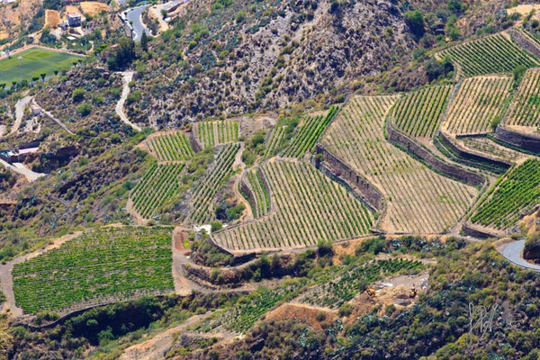 Gran Canaria - Terrazzamenti a Fataga - (2014)